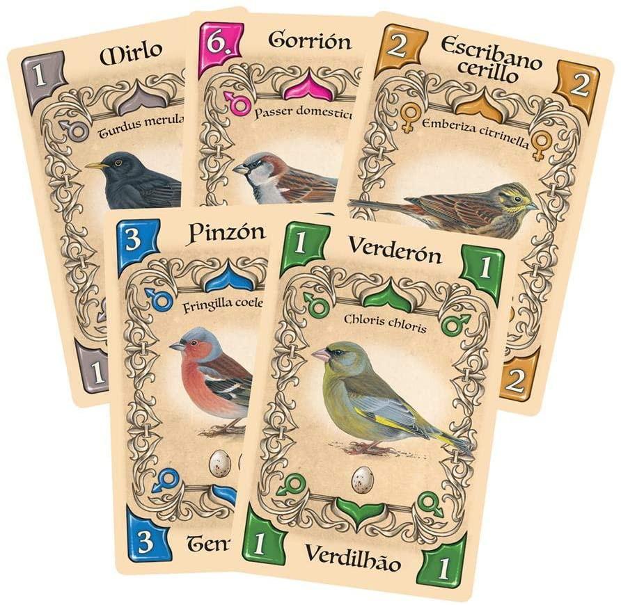 Pássaros Canoros